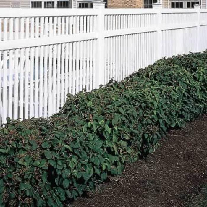 Williamsport Pool Fence - 5' High